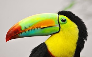 Toucan-Colorful-Bill